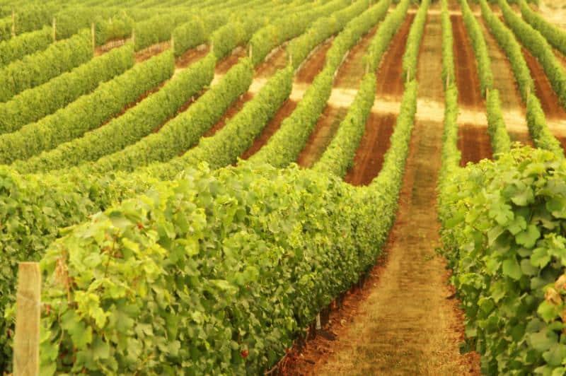 autralia wine region