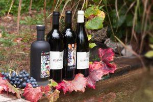 Best Tasting Red Wine for beginners